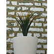 Fake It! - Yucca in white pot