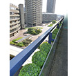 Fake It! - Barbican Brutalism: topiary balls in concrete boxes