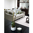 Fake It! - Zen Living: white orchid