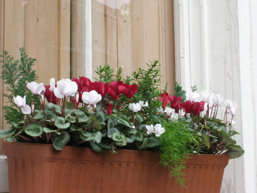 christmas holiday flower window box winter cold weather
