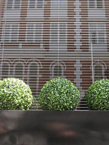 Buxus balls, close-up