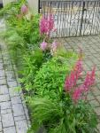 Partition: astilbe and grasses