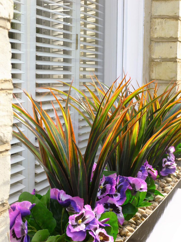 American hot: Yucca and purple pansy