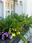 Hot tropics: Ferns and spring flowers